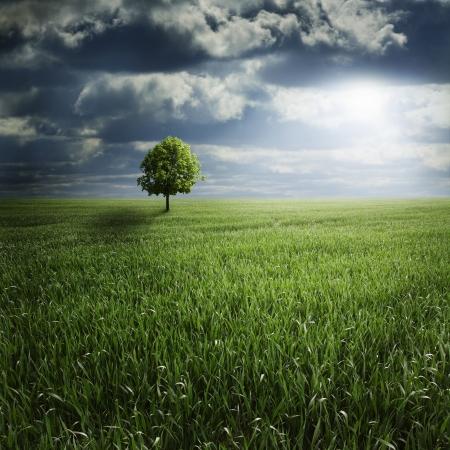 temp�te: Lone Tree dans le domaine avec la temp�te Banque d'images
