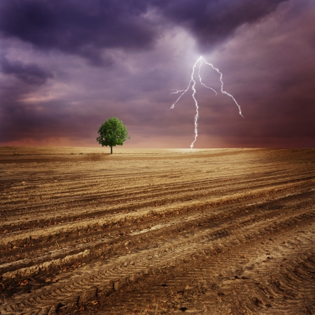 plowed field: Lone tree and lightning Stock Photo