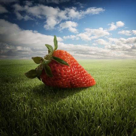 big strawberry on the field