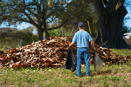 daunting: A distraught man with a rake and garbage bag in his hands is standing in front of a giant pile of leaves which he has to somehow bag up all by himself, a daunting yard work job.