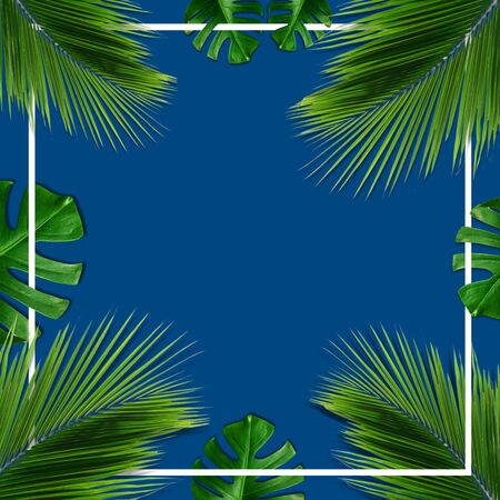 Summer card illustration. Palm and tropical leaves on blue classic background