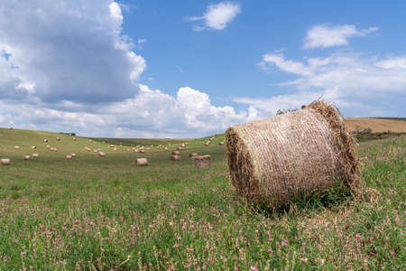 hay bales in the field in summer sunny day in France Provence