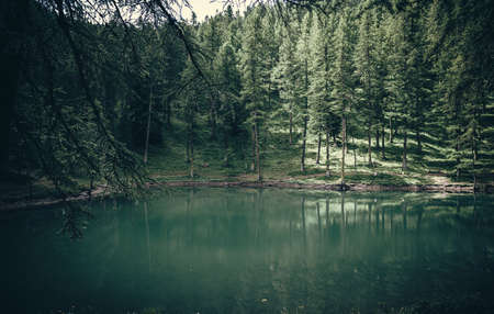 morning on a beautiful lake in deep forest