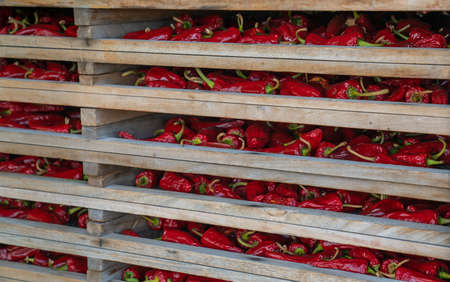 Espelette peppers drying on wooden dryer