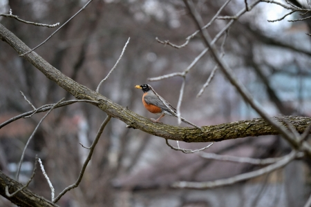chilling out: Just a robin chilling out