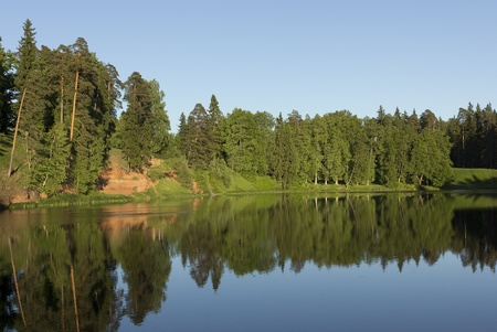 湖のほとりの森