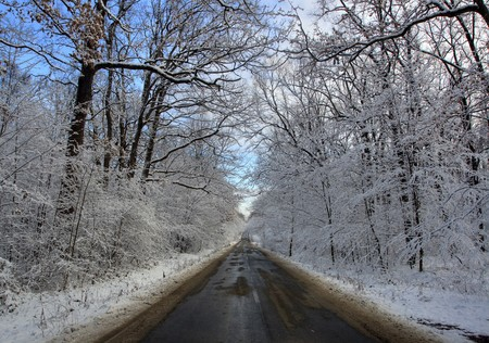 Country road through the forest in the winter