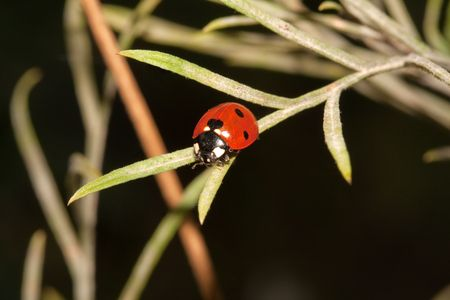 Close-up of a lady bug on a leaf Stock Photo - 4685963