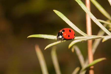 Close-up of a lady bug on a leaf Stock Photo - 4685967