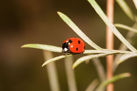 Close-up of a lady bug on a leaf Stock Photo - 4685965