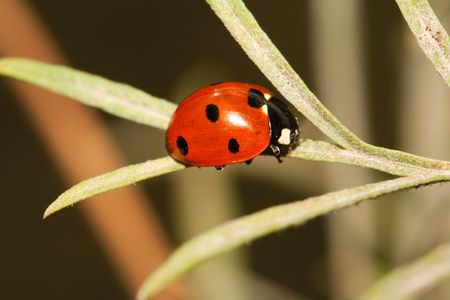Close-up of a lady bug on a leaf Stock Photo - 4685966