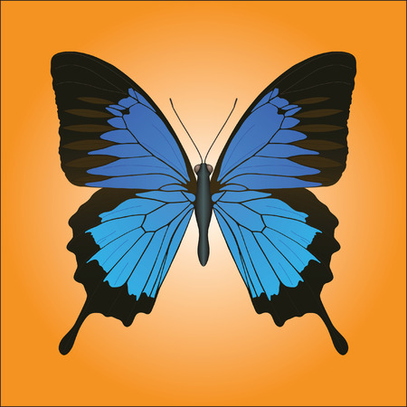 Papilio Ulysses butterfly closeup against orange background vector illustration. Illustration