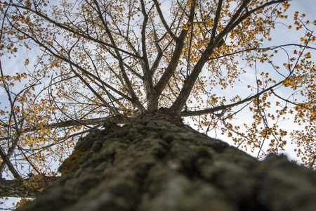 Trunk and crown of a Deciduous tree in the spring
