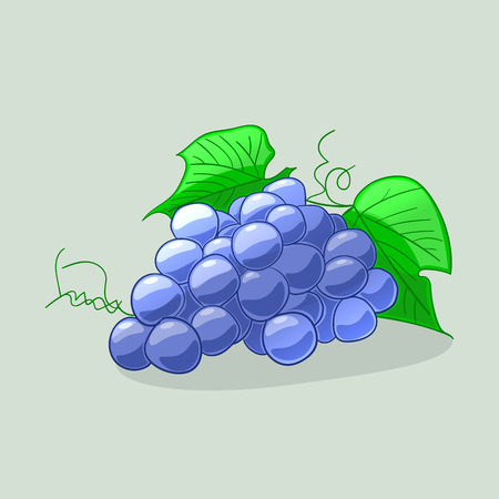 Juicy and ripe blue grapes. Cartoon style vector illustration