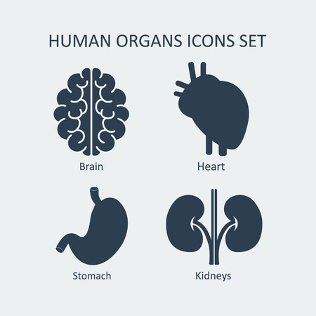 Human organs icons set. Vector illustration