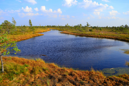 Big swamp wetlands Kemeri national park, Latvia. Travel concept.View of swamps in Latvia