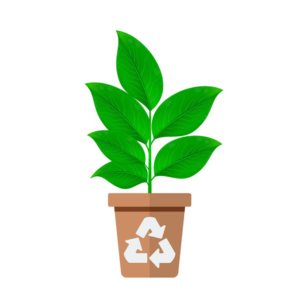 Green plant with pot icon. Isolated On White Background. Vector Design Illustration