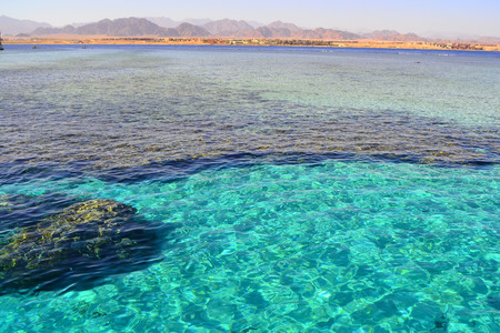 Red Sea. Egypt.The coral reef in the Red Sea