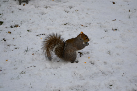Squirrel on the tree in the park, winter time 写真素材