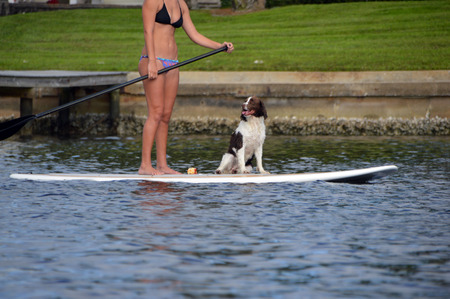 This is a picture of a dog on a paddle board Stock Photo