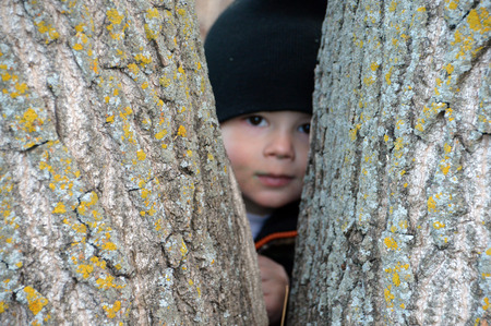 This is a photo of a boy hiding in a fork of a tree