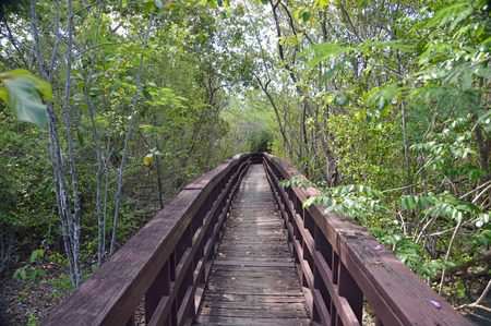 Photo of a boardwalk leading through a mangrove swamp