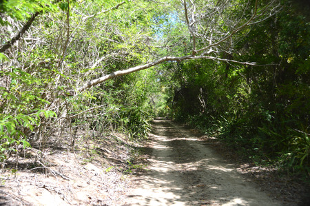 This is a photo of a dirt road in the forest leading to a secluded beach