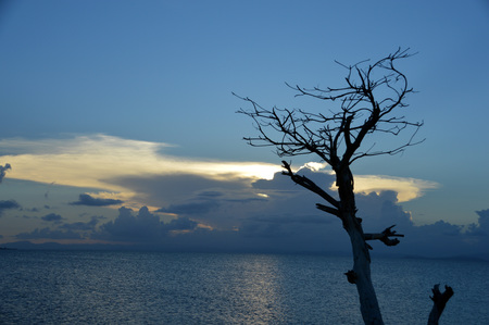 A sunset with a dyring (ghost) tree in the foreground.  This was taken in Puerto Rico over the Caribbean Sea Stock Photo