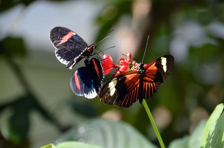 Three butterflies on a flower