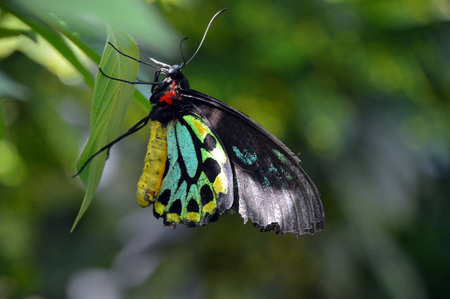 A colorful butterfly landed on a leaf
