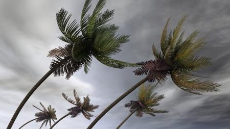 katastrophe: Palmen am Hurrikan Lizenzfreie Bilder