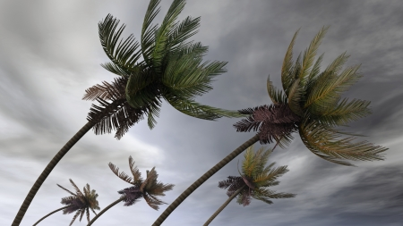 monsoon clouds: palms at hurricane