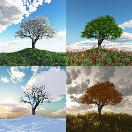 quatre saisons: onely arbre � quatre saisons