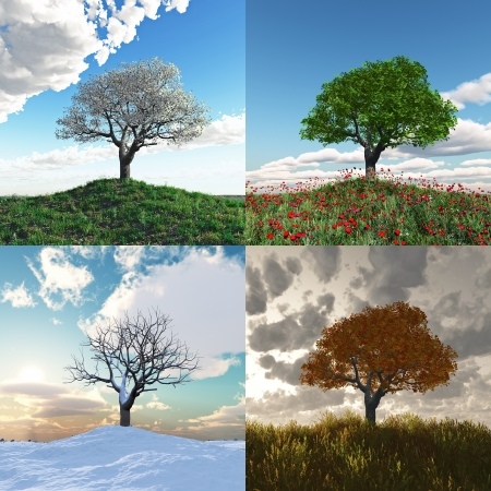 four season: onely tree at four seasons Stock Photo