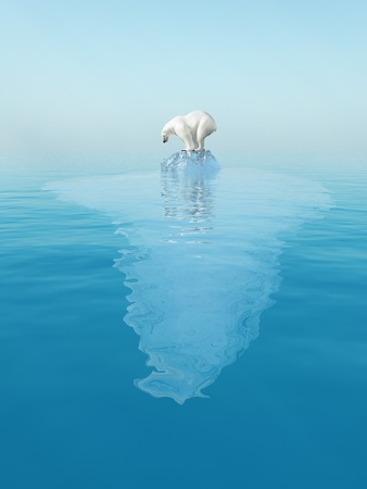 polar climate: last polar bear on iceberg