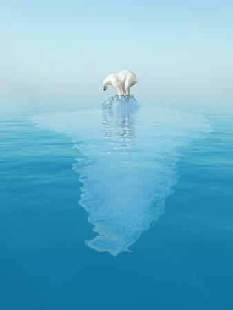 oso blanco: último oso polar en el iceberg