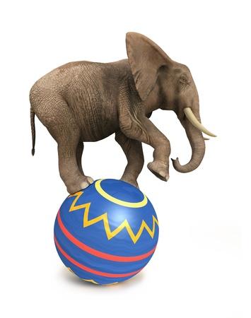 elefante: elefante, el equilibrio en la pelota