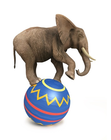circus elephant: elephant balance on ball