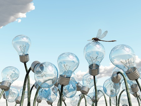 bloembollenvelden: gloeilamp veld Stockfoto