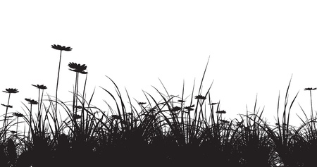 grass silhouette: grass field with camomile  Illustration