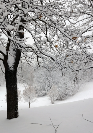 hillside: winter tree on hillside Stock Photo
