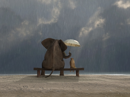 couple in rain: elephant and dog sit under the rain