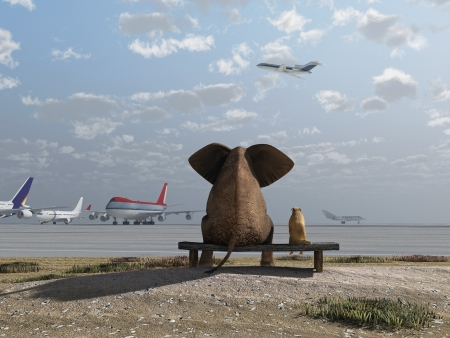 airport runway: elephant and dog sitting at the airport