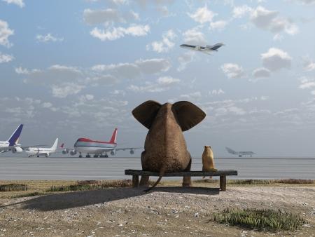 Lphant et le chien assis à l'aéroport Banque d'images - 18133357