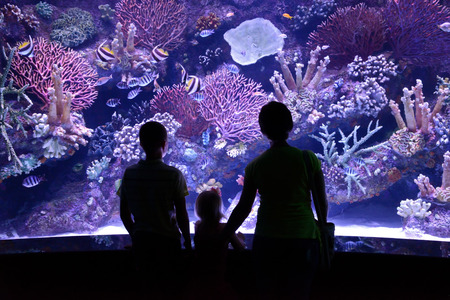 marine aquarium: people look at a large aquarium Stock Photo