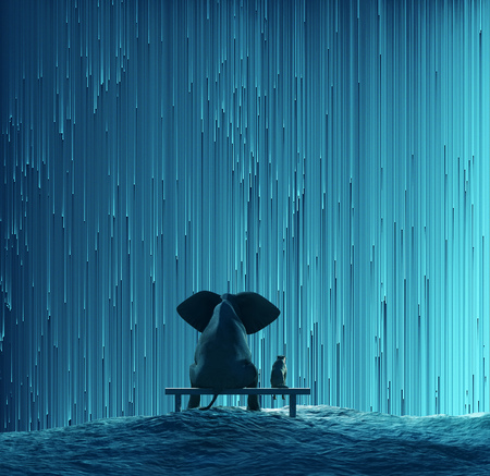 back to back couple: elephant and dog looking at star Rain