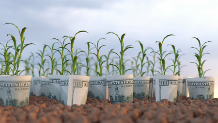 growing plants from financial investments Imagens