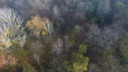 foggy autumn forest, aerial view