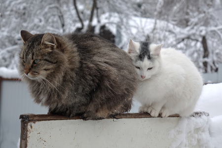 cat couple sitting on the fence in the winter garden