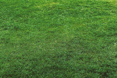 Green grass background texture. Element of design. Stok Fotoğraf